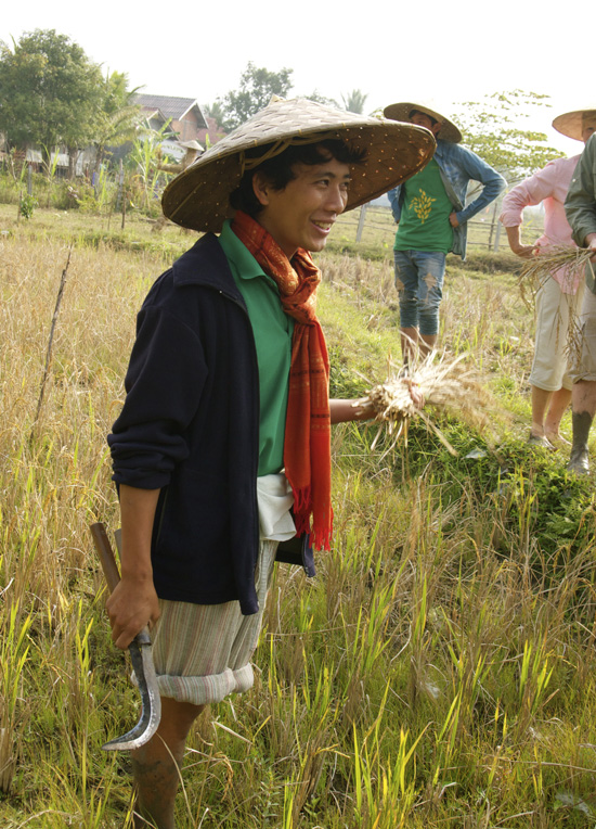 Laut after cutting the rice stalks