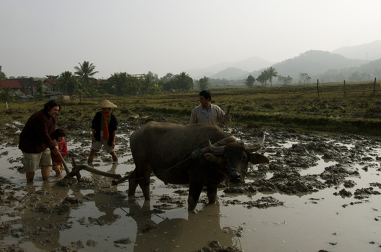 A father and son plough a field using a water buffalo at Living Land Farm
