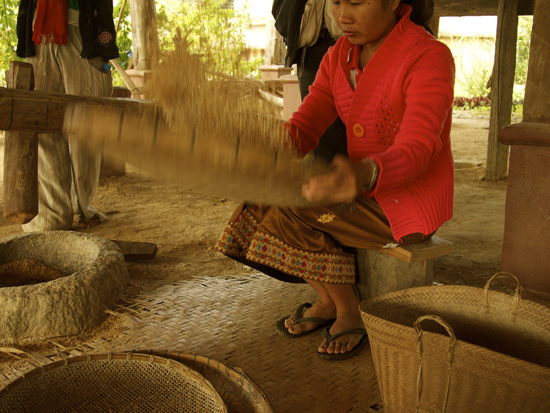 Winnowing Rice from the husks