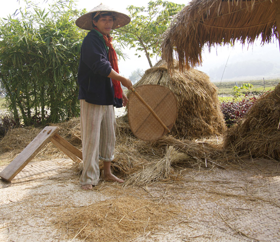 Winnowing Rice at Living Land Farm