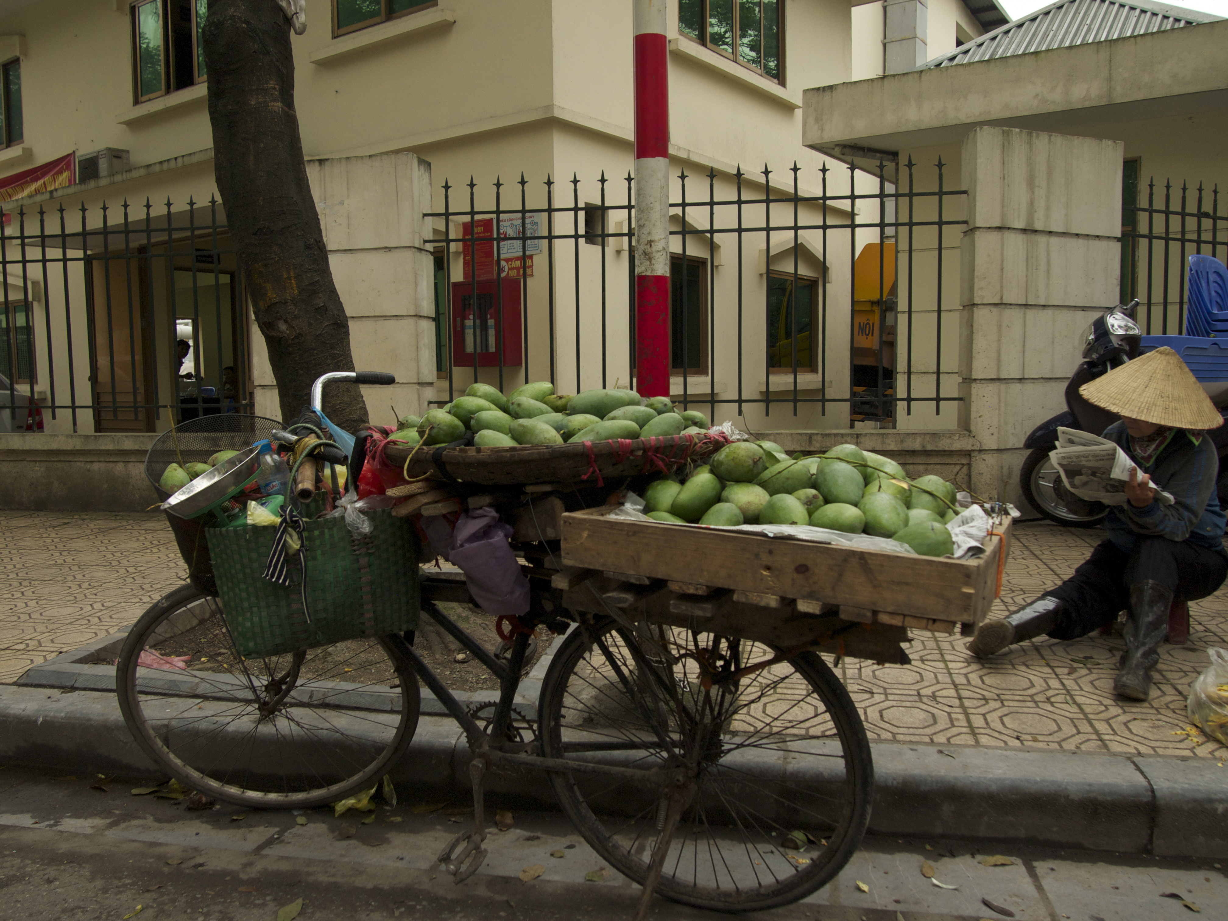 Green Mangoes and bicycle in Hanoi