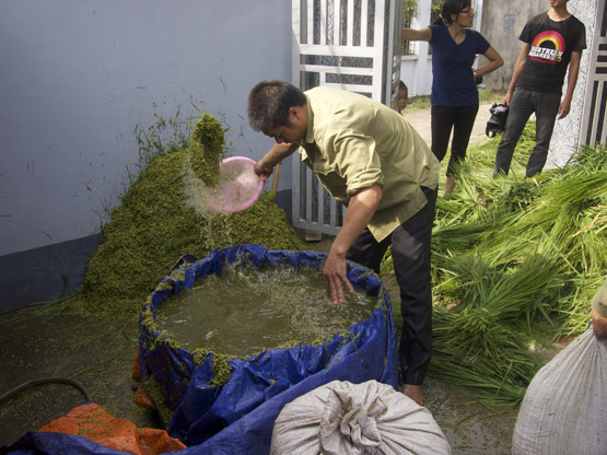 Washing of young green rice