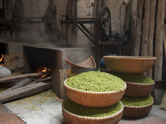 Freshly harvested young green rice kernels waiting to be roasted