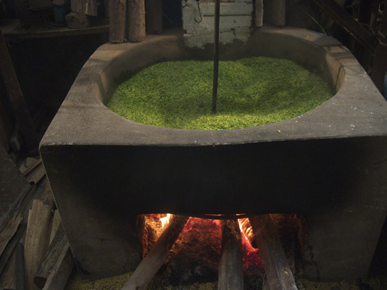 Young green rice kernels start the roasting process