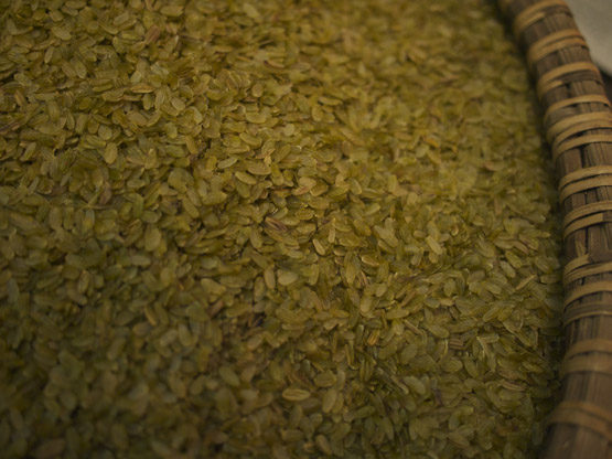 Husked young green rice before being pounded